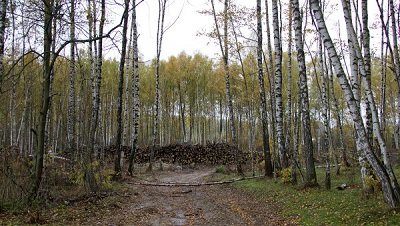 """6 тысяч деревьев, купленные Путиным  посадят в нацпарке """"Мещера"""""""